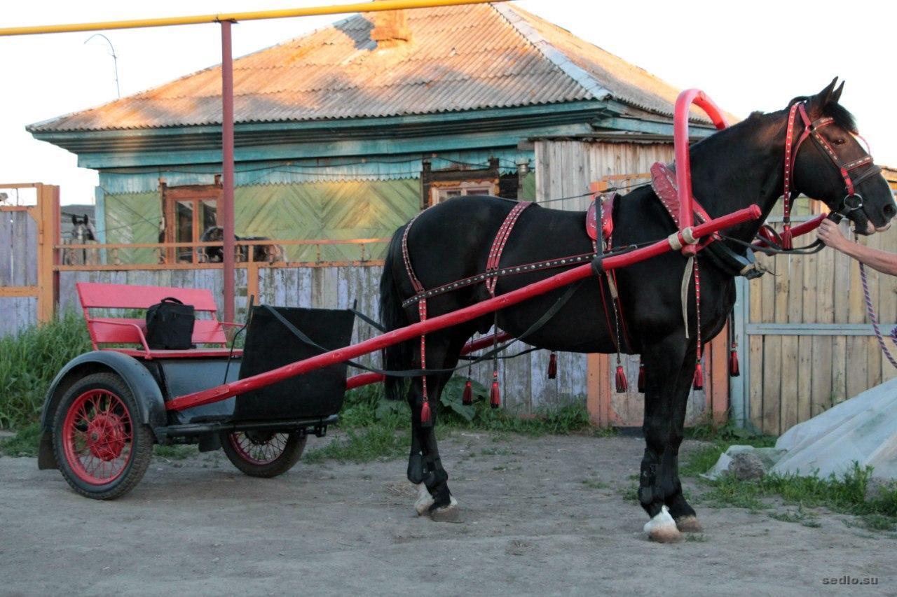 Ходок для лошади